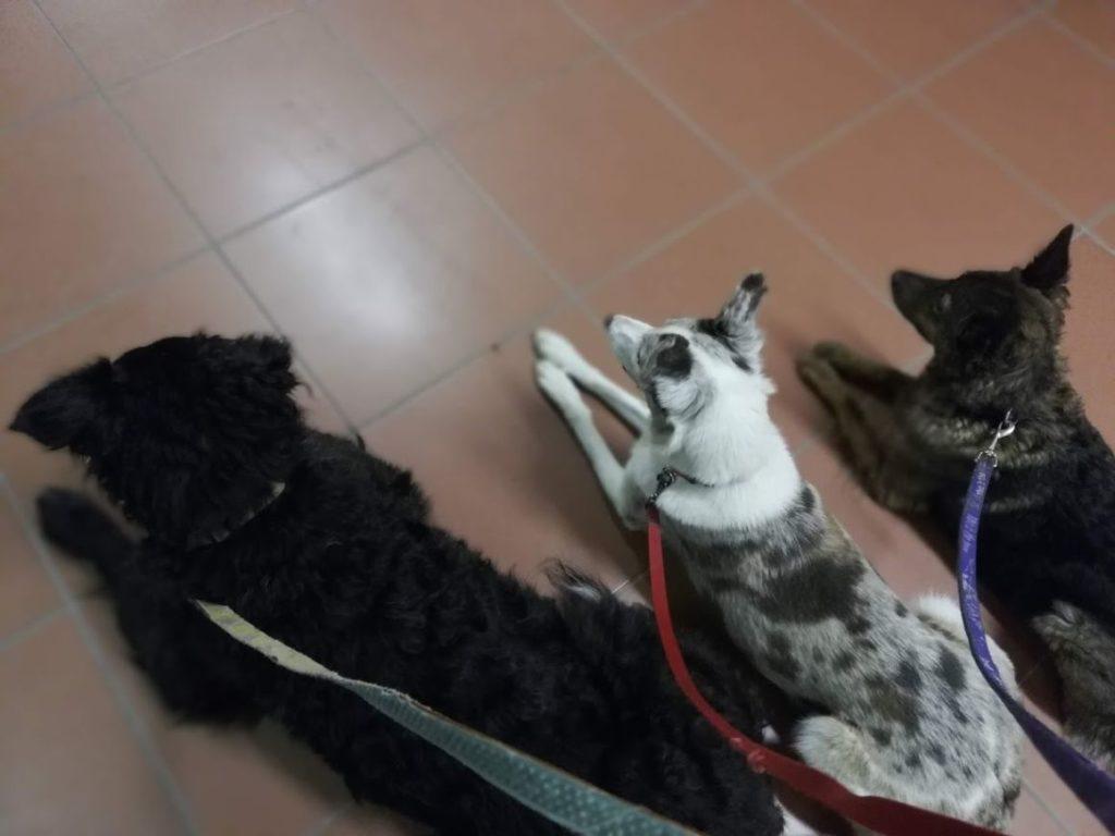 Idős kutyák tanítása